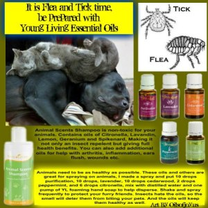 Essential Oils Flea and Tick Prevention Pic