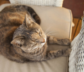 sleeping-cat-thinkstock-455787093-335sm12114