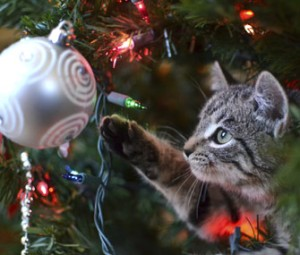 kitten-in-christmas-tree-thinkstock-459873589