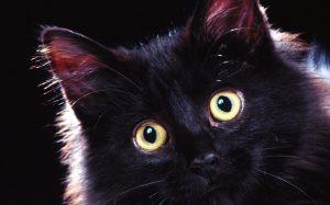 Beautiful-Black-Cat-3-cats-16155539-1280-800