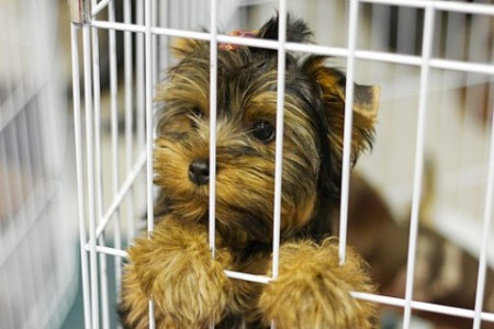 puppy-mill-red-flags-480x320