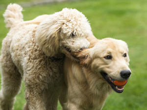 4-Ways-to-Make-Doggy-Friends