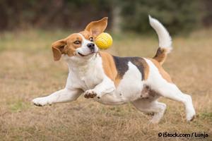 hyperactive-dog