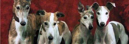 m10440671_Greyhounds