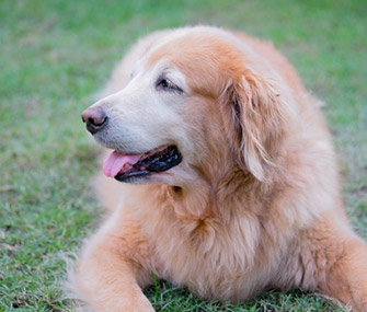 happy-senior-dog-thinkstockphotos-507278516