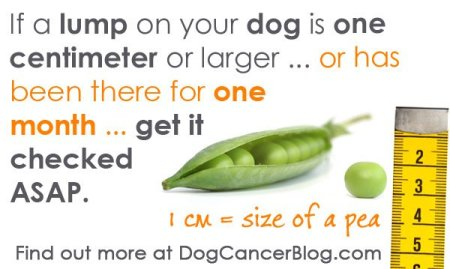 lumps-on-dogs