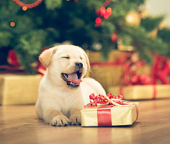 dog-with-holiday-gift-istock-000053459642