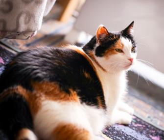 fat-cat-thinkstock-520535683