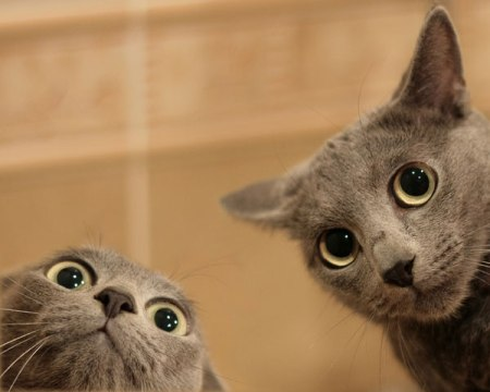 surprised-cats