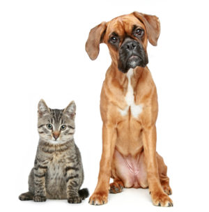 Dog-and-Cat4-300x304